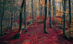 Autumn in the forest V by valiunic.deviantart.com