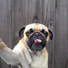 Norm, selfies