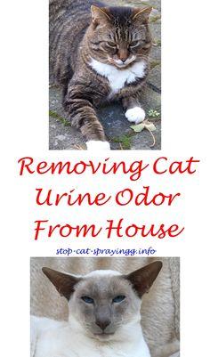 Cat Spraying House Cat urine Cat urine smells and Cat