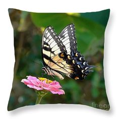 "Swallowtail Butterfly 3 14"" x 14"" Throw Pillow by Sue Melvin.  Our throw pillows are made from 100% cotton fabric and add a stylish statement to any room.  Pillows are available in sizes from 14"" x 14"" up to 26"" x 26"".  Each pillow is printed on both sides (same image) and includes a concealed zipper and removable insert (if selected) for easy cleaning."