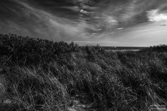 Dune grass blowing in the wind on the Jersey Shore. Beach Grass, Dune, My Images, Fine Art America, Monochrome, Pencil, Sketches, Sky, Wall Art