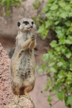 """And thank you that I am a meerkat. Amen."""