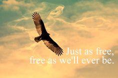 """Free"" Zac Brown Band"