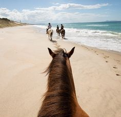 Horse riding along Pakiri Beach, North Island, New Zealand You are in the right place about Horse Riding Photography amazing photos Here we offer you the m Cute Horses, Pretty Horses, Horse Love, Beautiful Horses, Beautiful Beach, Crazy Horse, Cavalo Wallpaper, Foto Cowgirl, Horse Riding Gear