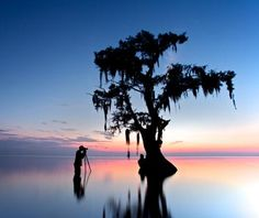Lake Maurepas, #Louisiana