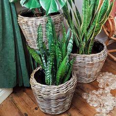 Desser - Rattan Furniture (@desserandco) • Instagram photos and videos Natural Furniture, Rattan Furniture, Cactus Plants, Wicker, Boho Chic, Photo And Video, Interior Design, Videos, Photos