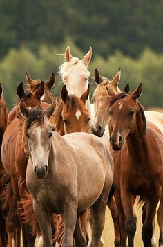 pictures of horses