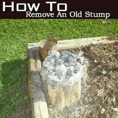 How To Remove An Old Stump – It's Hot
