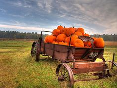 Wagon full of pumpkins....can't get more fall than that !!