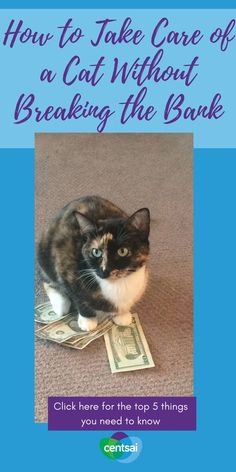 Your cat needs good chow, but you don't have to buy the expensive stuff. Cats can't read the price tag! #cat #catsofinstagram #cats #catstagram #catlife #catlover #catlovers #kitten #instacat #catloversclub Financial Literacy, Financial Planning, Make More Money, Extra Money, Thing 1, Career Change, Financial Institutions, Budgeting Tips, Money Matters