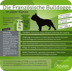 Die Französische Bulldogge ... in aller Kürze. Wissenswertes und Interessantes