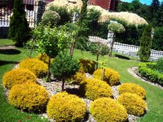 pin by emma watson on garden and entertaining pinterest landscaping ideas and gardens - Landscaping Design Ideas For Backyard