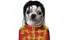 Famous Faces: Los famosos como perros y gatos - Yo soy este perro y demando, pobre!