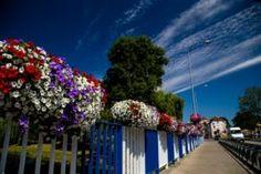 Jak ukwiecić mosty? Skrzynie kwiatowe do zadań specjalnych - Inspirowani Naturą Flower Tower, Flower Pots, Flowers, Begonia, Urban, City, Plants, Flower Vases, Plant Pots