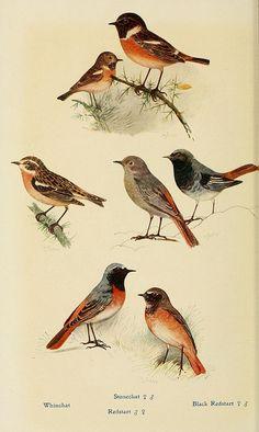 British birds in their haunts .... London,Dutton[1922]
