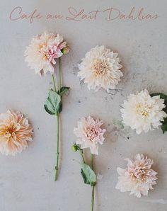 cafe au lait dahlias. Summer seasonal (June-September). LOVE these! Colors range from ivory to CHAMPAGNE to blush to peach.