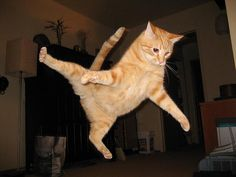This orange tabby does its best interpretation of a kung-fu kick. Description from windsorstar.com. I searched for this on bing.com/images