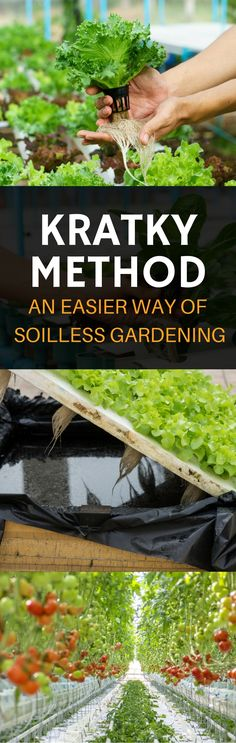 Kratky Method: An Easier Way Of Soilless Gardening