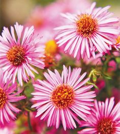 Aster looks great in a vase or in the garden! More fall-blooming flowers for your garden: http://www.bhg.com/gardening/flowers/perennials/fall-garden-plants/?socsrc=bhgpin080513aster=1