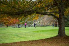 Beautiful autumn colours, Wairakei Golf + Sanctuary.  Photographer - Martyn Davies.