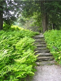 I love how the ferns spill onto the stairs.  So pretty.