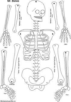 Harry Potter knutsels - Linosnede, skelet trekpop Preschool Curriculum, Kindergarten Activities, Science Activities, Preschool Crafts, Theme Halloween, Halloween Crafts, Life Science, Science And Nature, Human Body Crafts