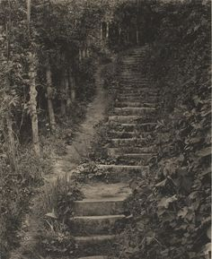 Frederick H. Evans  Winchelsea, Steps to Queen Elizabeth's Well. c. 1905  Purchased 1967 National Gallery of Canada