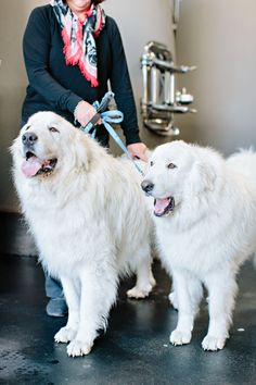 Our Story - Learn More About Summerland, Okanagan Wineries Great Pyrenees Dog, Different Wines, Organic Wine, Valley Ranch, Wine Label, Tasting Room, How To Stay Healthy, Vines, Insects
