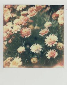 Spring snapshot.