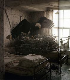 Eagle nesting on a bed!