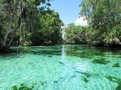"""<b><a href=""""http://www.floridasprings.org/visit/map/otter%20springs/"""">Otter Springs</a></b> <br> 6470 Southwest 80th Avenue, Trenton, FL 32693 <br><b>2 hours, 15 minutes from Orlando</b> <br><br>For the 21st century outdoorsman, Otter Springs offers an authentic natural experience complete with updated amenities. If stewing in algae-filled water before a two hour drive home makes you feel a little icky and gross, rinse off in one of two bathhouses with hot showers or take a dip in the…"""