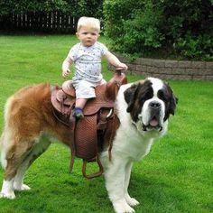 Upa cavalinho !!!!!