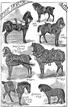 19th-century illustration of different working horses