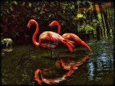 Flamingo Gardens by Lorraine Robinson