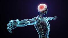 Ecco una serie di curiosità che riguardano il corpo umano, alcune delle quali sono ben conosciute ormai da anni, altre invece....