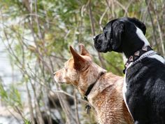 Hund aus dem Tierheim: Darauf sollten Sie achten – Foto: Shutterstock / Annette Shaff www.einfachtierisch.de