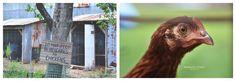 Emerald Coast Images » Portrait and Lifestyle Photography | Perdido Key | Pensacola | Orange Beach |