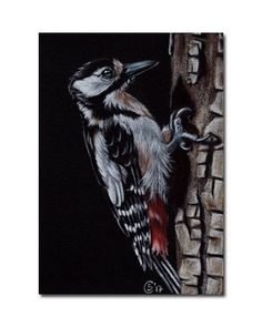 WOODPECKER black white bird songbird painting Sandrine Curtiss ORIGINAL Art ACEO #Realism