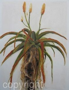Aloe-in-bloom by Nicola Firth Oil ~ 1300 x 1000