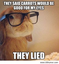 They said dear bunny, they said - US Humor - Funny pictures, Quotes, Pics, Photos, Images
