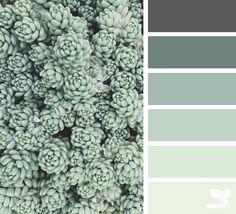 Succulent Tones - http://www.design-seeds.com/succulents/succulent-tones-3