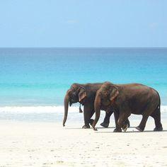 Love, travel, elephants.
