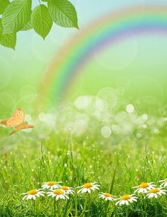 Spring Gress With Rainbow Photography Backdrop Spring Landscape, Flower Landscape, Landscape Mode, Live Backgrounds, Live Wallpapers, All Nature, Walking In Nature, Rainbow Background, Grass Background