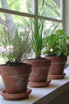 ...herbs in pots