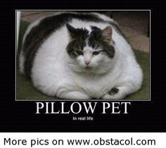 Pillow-pet.jpg 320×286 pixels