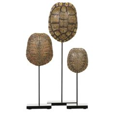 Collection of Authentic Turtle Shells on Steel Display Stands | From a unique collection of antique and modern taxidermy at https://www.1stdibs.com/furniture/more-furniture-collectibles/taxidermy/
