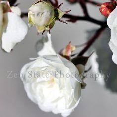 Rose Art. White Rose Flower Photography. Still Life Flower Photo. White Flower Blossom Wall Art. Framed Unframed or Canvas Prints.