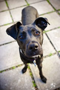 How to photograph a black dog   http://www.dummies.com/how-to/content/how-to-avoid-problems-photographing-black-dogs.html
