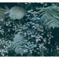 Madre natura by vittoriabottasini