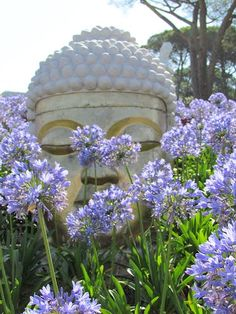 Buddha Eden View